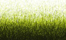 Vector Background, Grass Background, Grunge Style Illustration, Halftone Gradient, Golden Green Color.
