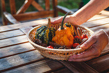 Woman Decorating Wooden Table With Pumpkins, Cones And Other Decoration In Wicker Basket. Preparing Table For Thanksgiving Dinner In Garden