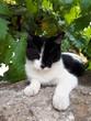 Biało czarny kot w cieniu drzewa, Italia.