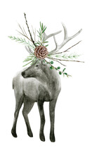 Watercolor Realistic Deer Forest Animal Isolated On A White Background Illustration