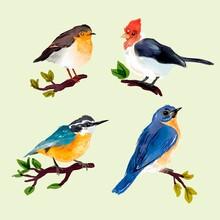 Collection Watercolor Autumn Birds Vector Design Illustration