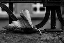 Closeup Shot Of A Dry Autumn Leaf Fallen In The Street - Grayscale Shot