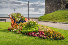Flower Pot Made Out Of Carriage Or Wagon With Wooden Wheels. Flower Bed In Front Of Carrickfergus Castle, Northern Ireland