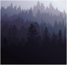 Background With Foggy Forest