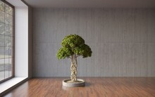 Empty Room; Black Plaster Wall With Bonsai Tree In Pot; Template Design; 3d Rendering, 3d Illustration