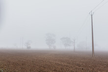 Foggy Weather Country Paddock, Power Line And Trees