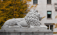 Lion Statue Sculpture In Downtown Of Vancouver BC Art Gallery.
