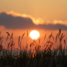 Beautiful Sunset At Seaside: Coastal Dry Grass Stem Over Colorful Sunsetting Sky. Summer Evening On Sea Or Lake Coast Natural Landscape View. Nature Beauty, Summertime Travel And Recreation Concept