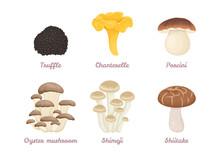 Set Of Vector Cartoon Mushrooms. Porcini, Chanterelle, Truffle, Oyster Mushroom, Shimeji, Shiitake.