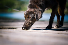 A Dog From A Dog Shelter At An Obedience And Socialization Training By The Lake.