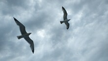 Two Seagulls Flying In The Sky And Clouds