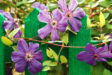 Purple Flowers On A Stand