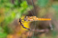 Summer Background - Dragonfly Sitting On A Tree Branch