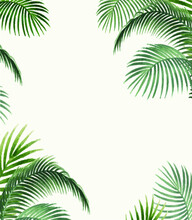 Palm Leaves For Mock Insert Text Here For Gift Card And Blogs, Website Texture Template