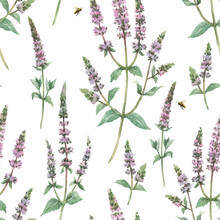 Beautiful Vector Floral Seamless Pattern With Hand Drawn Watercolor Spearmint Flowers. Stock Illustration.