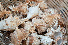 White-browns Different Seashells In A Wicker Basket. View From Above. Macro Photography.