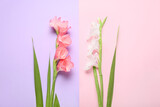 Gorgeous gladiolus flowers on color background