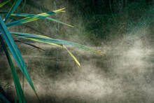 Early Morning Misty Wetland, West Coast, New Zealand.