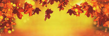 Autumn Red Leaves Of Maple Tree In Autumn Park. Fall Background