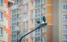 Two Pigeons Are Sitting On A Lamppost Among Tall Buildings