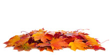 Heap Of Colorful Maple Leaves Isolated On White Background