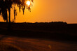 Zachodzące słońce za brzozą, ciepłe pomarańczowe odcienie