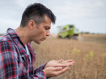Agronomist Standing In Field Holding Soy Beans Blowing Away Dry Pods.