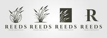Set Of Vector Reed Or Cattail Vintage Logo Vector Illustration Design
