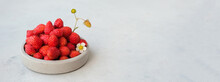 Banner. Red Berries Of Wild Strawberries On A Gray Concrete Background. Summer Concept In Minimalism.