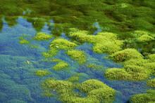 スギゴケが一面に密生する笹倉湿原。愛媛県久万高原町の石鎚山系にある。