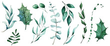 Isolated Christmas Evergreen Branch, Holly Leaves, Eucalyptus, Greenery Etc. Traced Vector Watercolor Set. Hand Drawn Illustration Collection On White Background. Water Colour Drawing.
