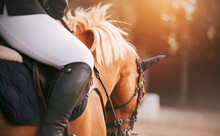 A Rider Sits On A Beautiful Sorrel Horse With A Light Mane In The Saddle, Holding It By The Bridle Rein On A Sunny Day. Equestrian Sports. Horse Riding.