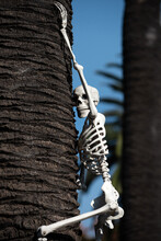 Halloween Skeleton. Halloween Scenery. Terrible Holiday At Home. Halloween In The USA. Traditions And House Decor.