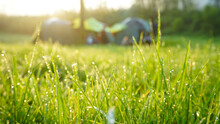 Close-up View Of Beautiful Dew Drops On Green Grass With Warm Sunshine In The Morning And Defocused Camping Tent Background