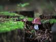 brązowy grzyb w lesie