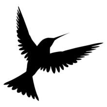 Vector Illustration Of Birds. Black Hummingbird On A White Background.