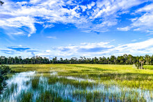 Marsh And River Grass In The Swamps Of Louisiana