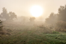 Early Autumn Morning With Sun And Fog In The Steppe.
