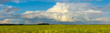 Summer Panoramic Landscape With Rainbow In Sky With Rainy Clouds And Green Soy Field On A Foreground.
