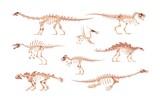 Fototapeta Dinusie - Dino bones. Cartoon dinosaur skeletons for kids illustration. Skulls and body fossil parts of Jurassic raptors. Prehistoric predators and herbivorous. Vector isolated extinct reptiles set
