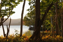 秋の斜陽の人の居ない湖畔の森。愁いの或る穏やかな雰囲気。