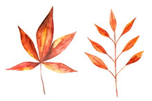 Watercolor Drawing Of Autumn Leaves Isolated On The White Background. Hand Painted Illustration Of Red And Yellow Leaf.
