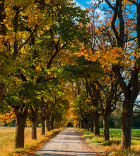Autumnal Landscape With Countryside Gravel Road Among Old Oak Tress