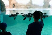 A Boy In A Penguin Aquarium