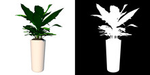 Front View Of Plant (Pot With Plant 2) Tree White Background 3D Rendering Ilustracion 3D