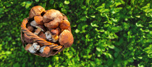 Fresh Vegetable Food Mushrooms In A Basket Top View On Green Grass Background On Floor