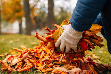 A Close-up Shot Of A Gloved Man Gathering Leaves In A Pile. A Man Gathering Leaves In Autumn Time.
