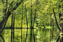 Summer Landscape Background. Green Foliage And Pond In Park Or Forest. Wild Nature
