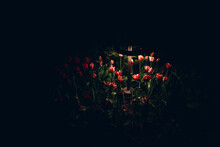 A Flower Bed With Pink Rose Flowers In The Dark Is Illuminated By A Garden Lamp.