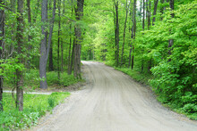 Country Road Inside Spring Green Forest